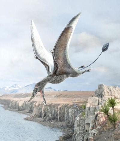 val-dinosaur-rhamphorhynchus