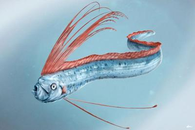 oarfish-animal-magnificient-ocean-creatures-val-2015-final-web