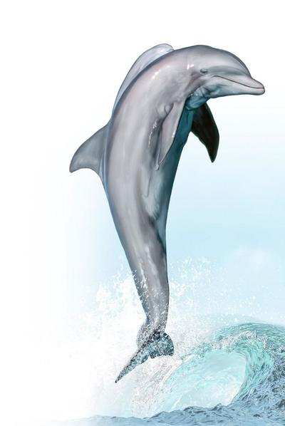 bottlenose-dolphin-animal-magnificient-ocean-creatures-val-2015-final-web-72dpi