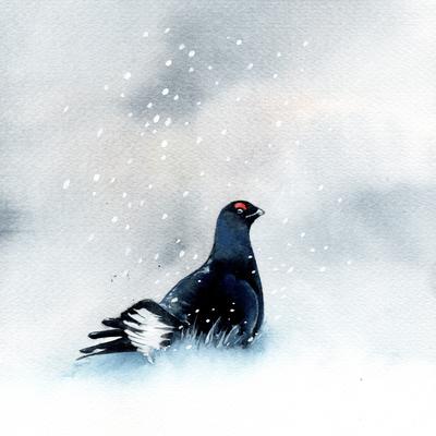 grouse-snow-christmas-150dpi-jpg