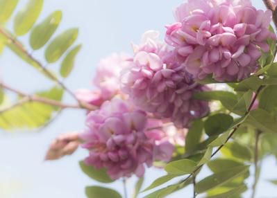 mpromanticpink-floral1-jpg