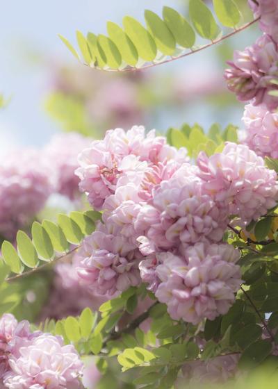mpromanticpink-floral3-jpg