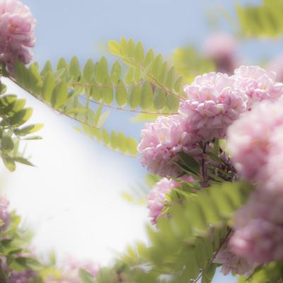 mpromanticpink-floral4-jpg