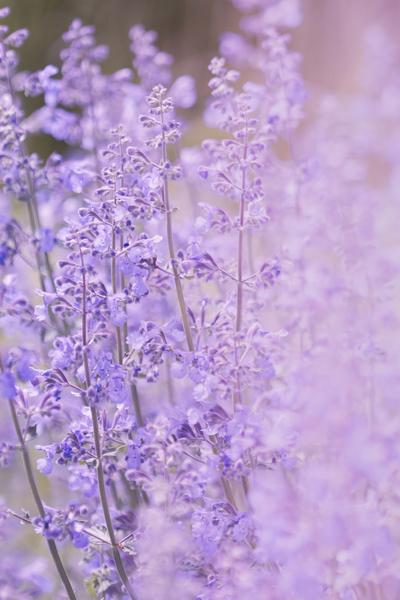 mpvioletfloral-jpg