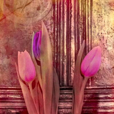 three-pink-tulips-still-life-jpg