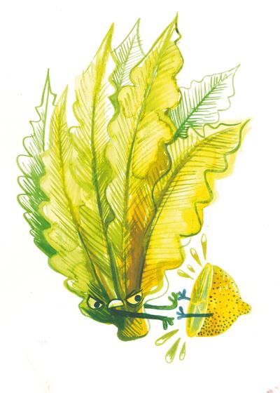 vegetables-limon-lettuce-jpeg