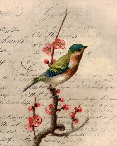 colourful-bird-on-branch-with-blossom-over-vintage-ephemera-retro-nature-claire-pryce-jpg